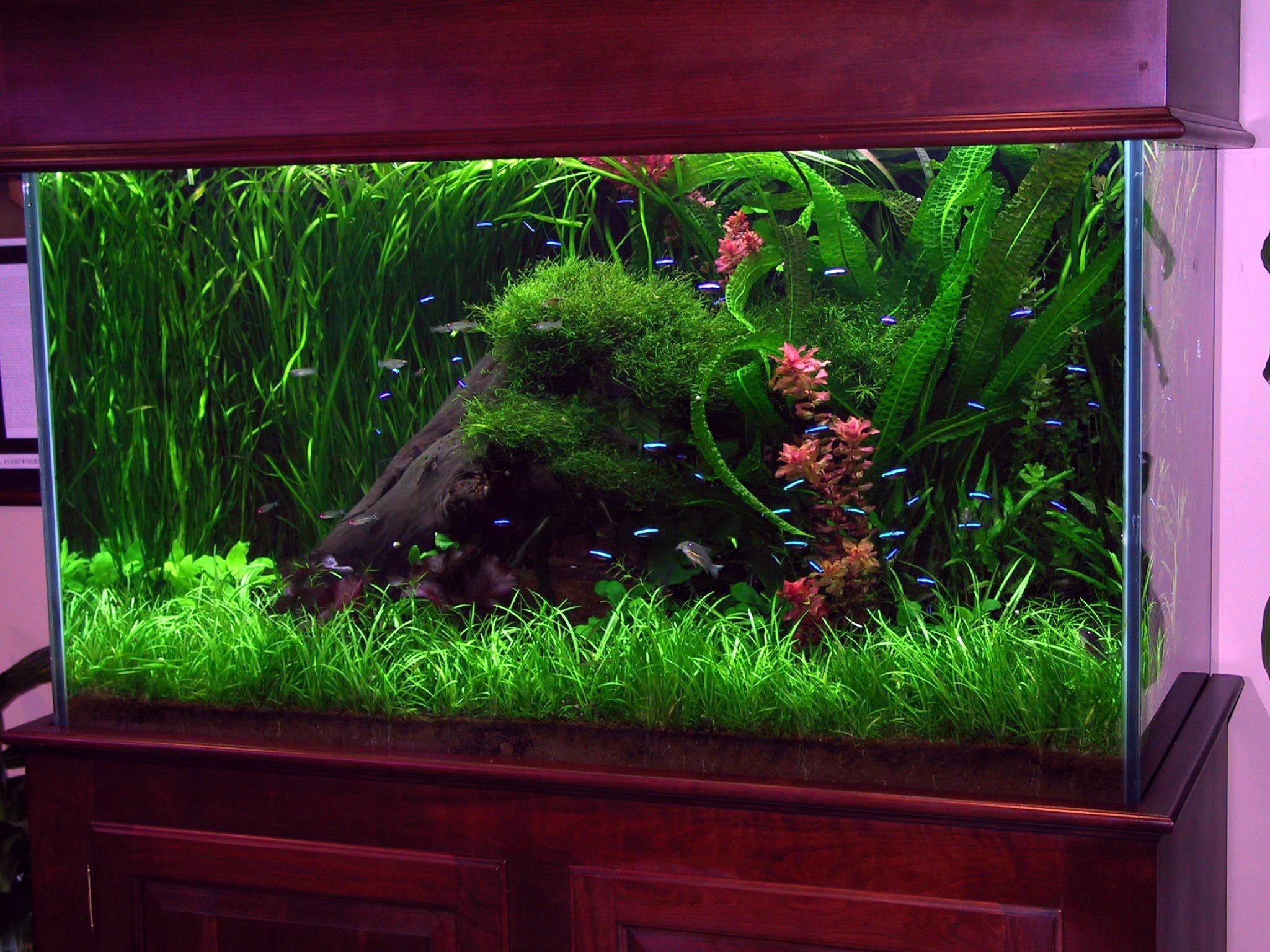 Fischideen für Ihr neues Aquarium