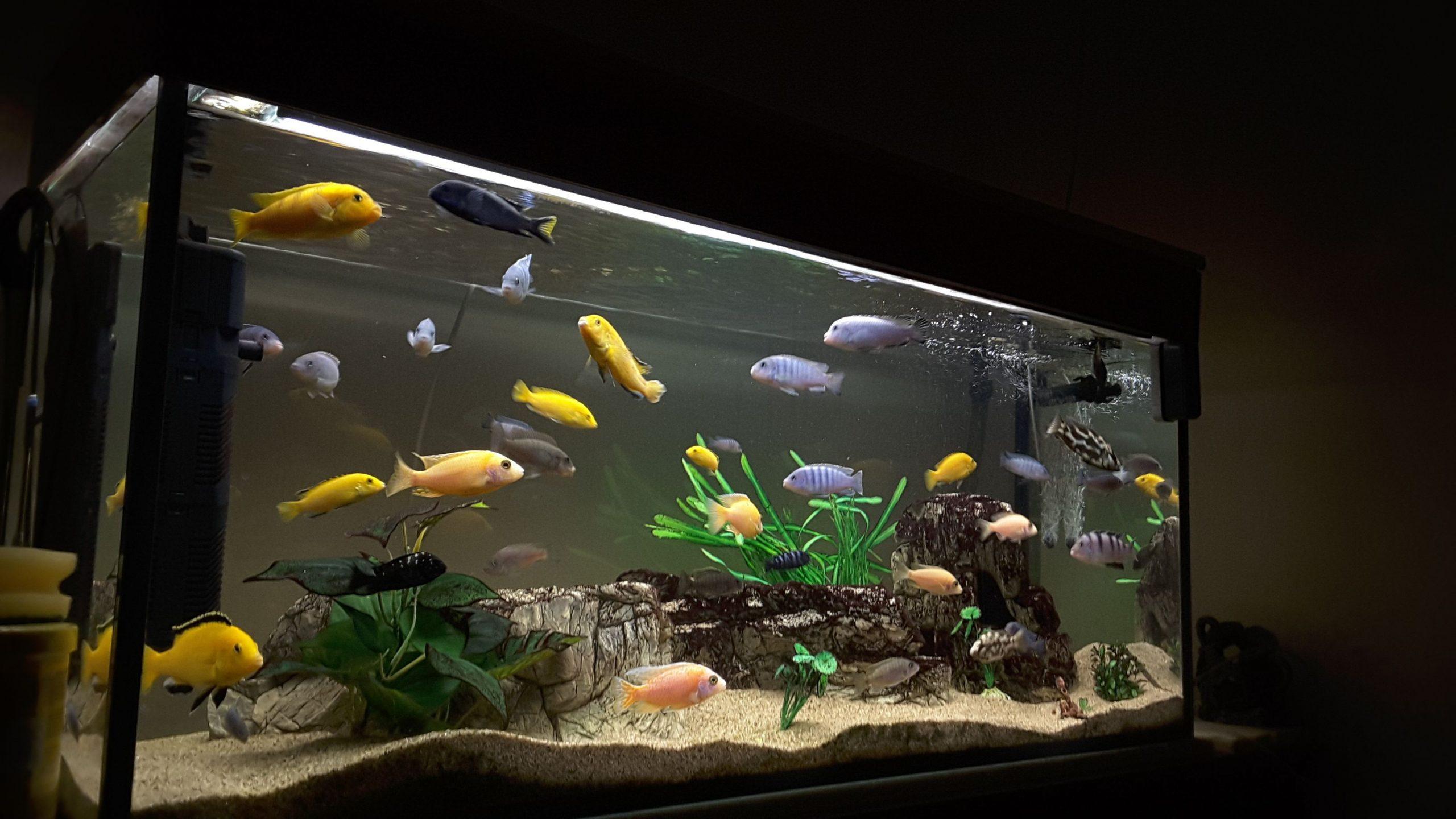 Wichtige Dinge über Aquarium Light